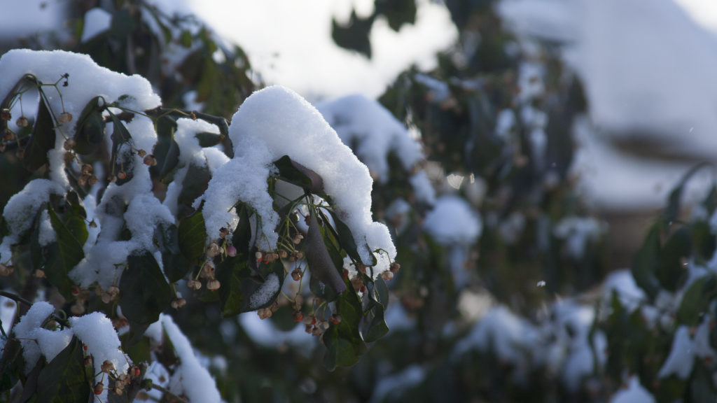 snow_on_leaves